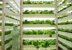Biotech-agriculture-tandem