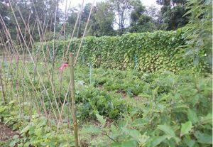 Biological-agricultural-plots
