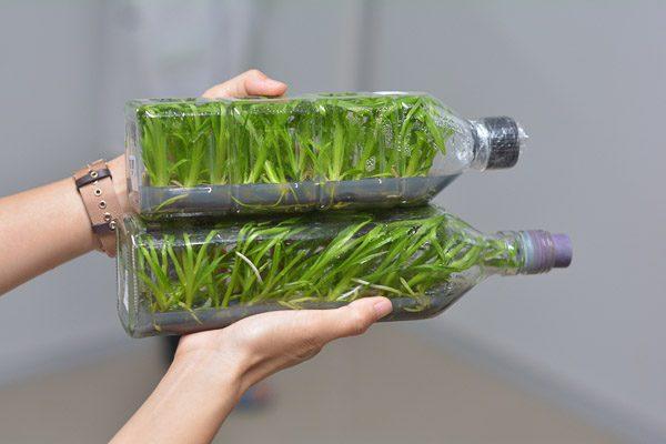 Plants-Tissue-Culturepicccneww